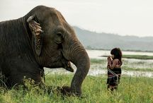 Elephant of Vietnam