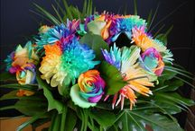 multicolour flowers