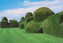 Topiary and hedges