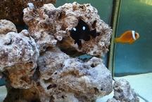 Nano reef  / Domino damsel