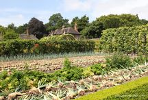 Vegetable Gardens and Vegetable Growing / Vegetable Gardens to visit and vegetables to grow.