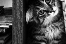 love   gatti