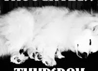 Thoughtless Thursday