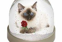Cat Globes