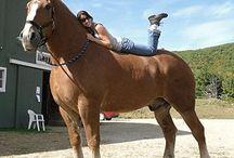 Biggest Horse in the World: Zeus