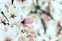 Beautiful Spring / Lovely pictures of Spring