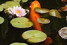 Pond (Water Garden) Plants Ideas in the Rochester (NY) Area by Acorn Ponds & Waterfalls / Pond (Water Garden) Plants in the Rochester (NY) Area-Information by Acorn Ponds & Waterfalls Plants are great for adding character to a pond by providing color and texture, but from a filtration perspective, they're second to none. The addition of aquatic plants or water plants to your pond in the Rochester (NY) Areas have many benefits and are an important part of the ecosystem.