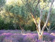 Flower beds and Garden