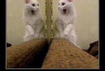 Drôle / Photo pour faire rire