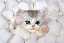 Tatlı Kediler