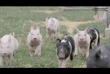 Día Internac. de animalitos
