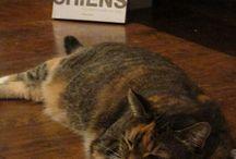 Zoé, le chat de l'Orange Bleue...