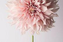 λουλουδια♥