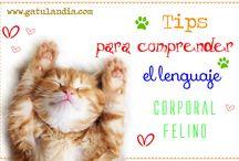 Amantes de Los Gatos, CatLovers Gatulandia.com / Noticias, Curiosidades e Historias Sobre el Maravilloso mundo de los Gatos. :D Si te gustaría saber más te invito a visitar Gatulandia.com