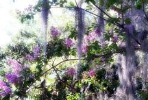 Crape Myrtles we love / by Sabrina and Todd Farber