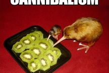 Funnies animales