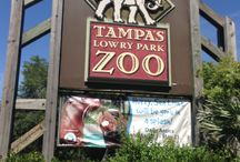 Family Friendly Places In Tampa, FL / Find all the cool family friendly places in Tampa, FL