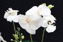 Silk Flowers / Stunning life-like silk flowers