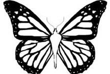 Butterflies / by Brenda A