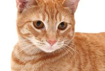 Catchannel Q & A with Dr. Plotnick / by Manhattan Cat Specialists