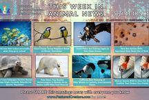 Animal News