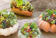Pumpkin Designs and Inspirations / Inspiration for creating pumpkin succulent designs!
