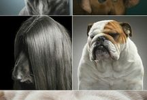 Fabulous Pet Photography
