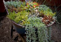 Barrows & Bicycles / old wheelbarrows and bikes recycled into garden features and flower containers