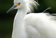 Florida Birds, Part 1 / Spring has sprung and the birds are chirping! What kind of birds are in #PalmCoast, #Flagler County, and nearby? It's a sure bet that RE/MAX Flagstaff can find you a home with plenty of beautiful birds nearby. We live in a birder's paradise!
