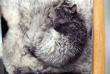 Snuggle animals