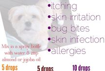 Oils for Dogs