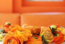 orange / by Kari Bell