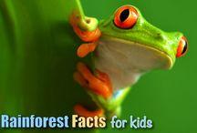 Rain Forest Fun for Kids