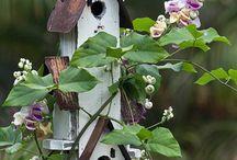 birdhouses / vogelhuisjes / by Margreet Kroon