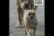 lol...!!!:)))