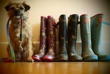Life is better with a border terrier!