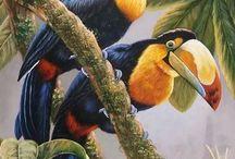 Aves exóticas, guacamayas y loros