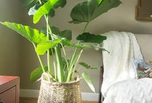 Indoor House Plant Ideas