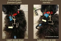 Product Reviews / by ThunderShirt