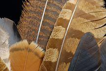 Featherology / by Anna Soole