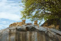 Wildlife / Every week we select the best safari moments captured by our guests and guides from Tanzania and Kenya.