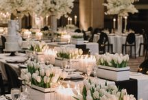 Wedding White Tulip