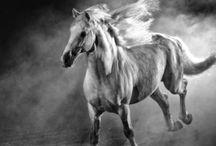 Cavalli black & white