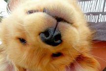 Animals / Funny and cute animals