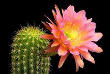 Serap öğretmenin çiçek bahçesi