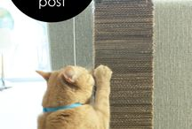 DIY for cats and dogs