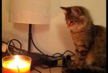 Katzensprüche