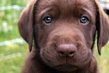 Pup Love  / by Kalen Jones