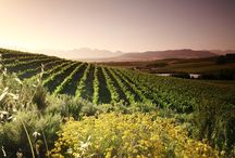 Vondeling Wines / This working wine farm has a tranquil atmosphere with panoramic mountain and vineyard views, and scenic hikes with Table Bay and Mountain visible in the distance.   http://www.go2global.co.za/listing.php?id=2298&name=Vondeling+Wines