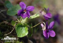 colors - violet / love love love!!!